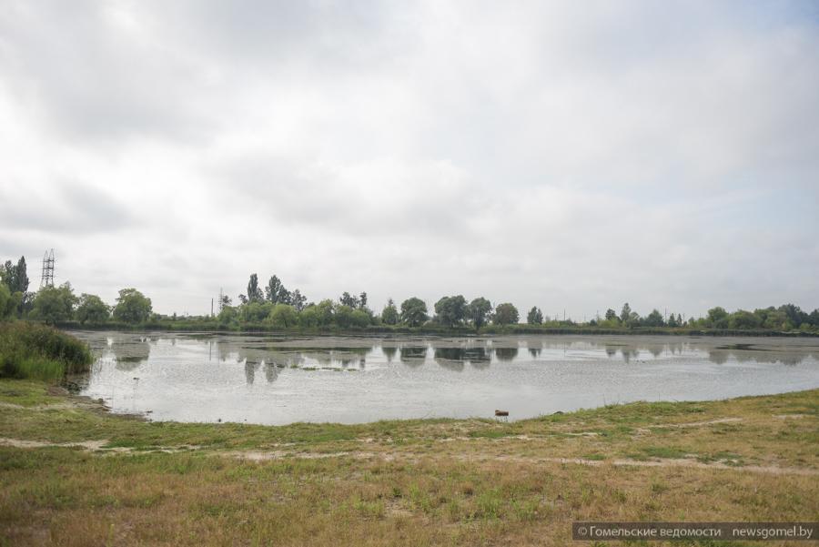 Камыши озеро