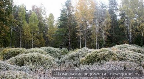 Вночь напятницу вРязанской области подморозит до-3 ºС