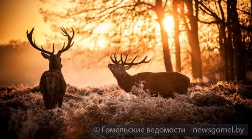 конкурс фотографий в беларуси