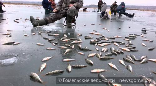 Весенний судак - Новости Гомеля и области
